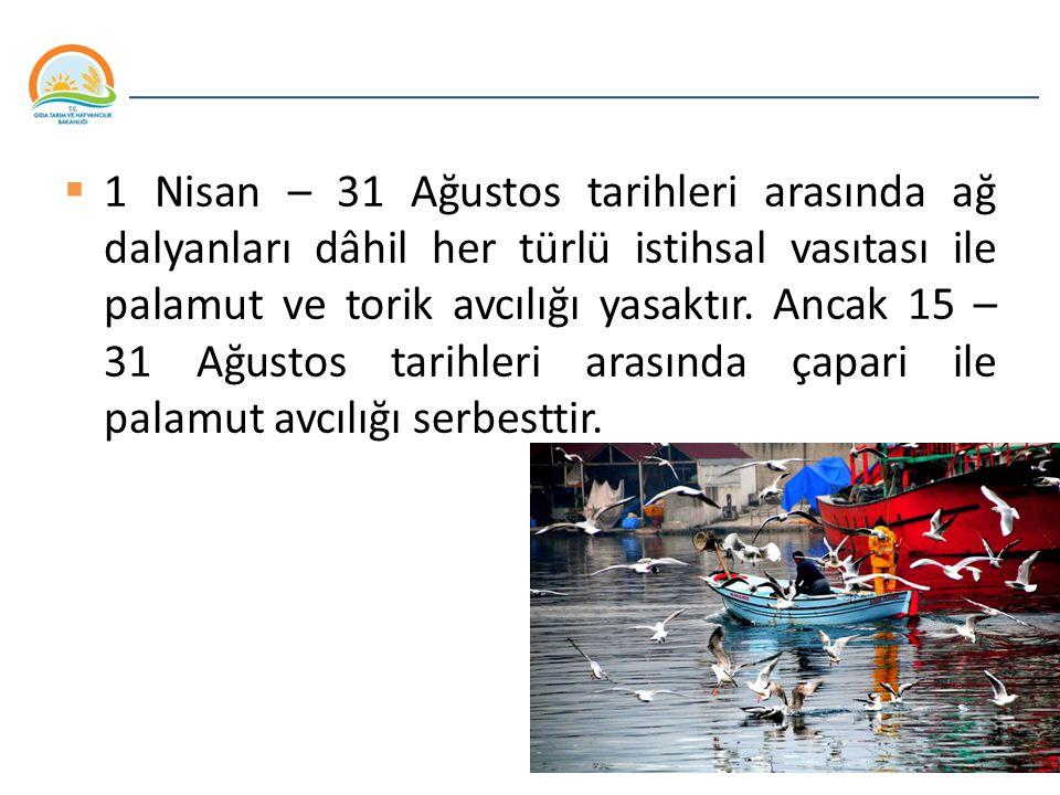 1 Nisan – 31 Ağustos tarihleri arasında ağ dalyanları dâhil her türlü istihsal vasıtası ile palamut ve torik avcılığı yasaktır.