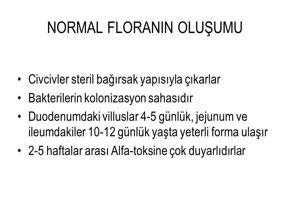 NORMAL FLORANIN OLUŞUMU