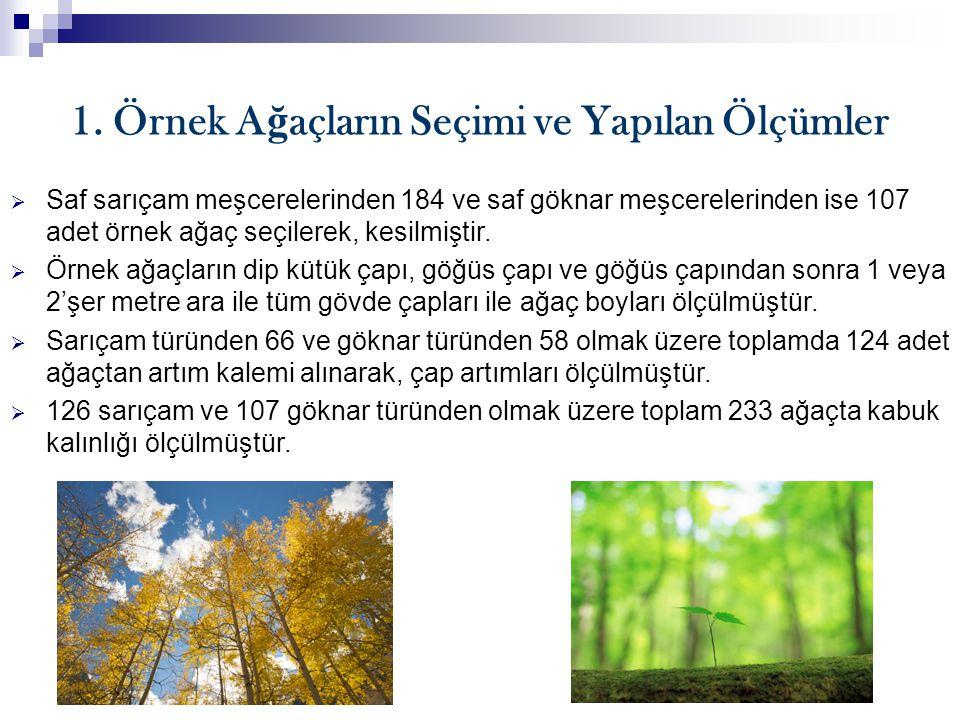 1. Örnek Ağaçların Seçimi ve Yapılan Ölçümler