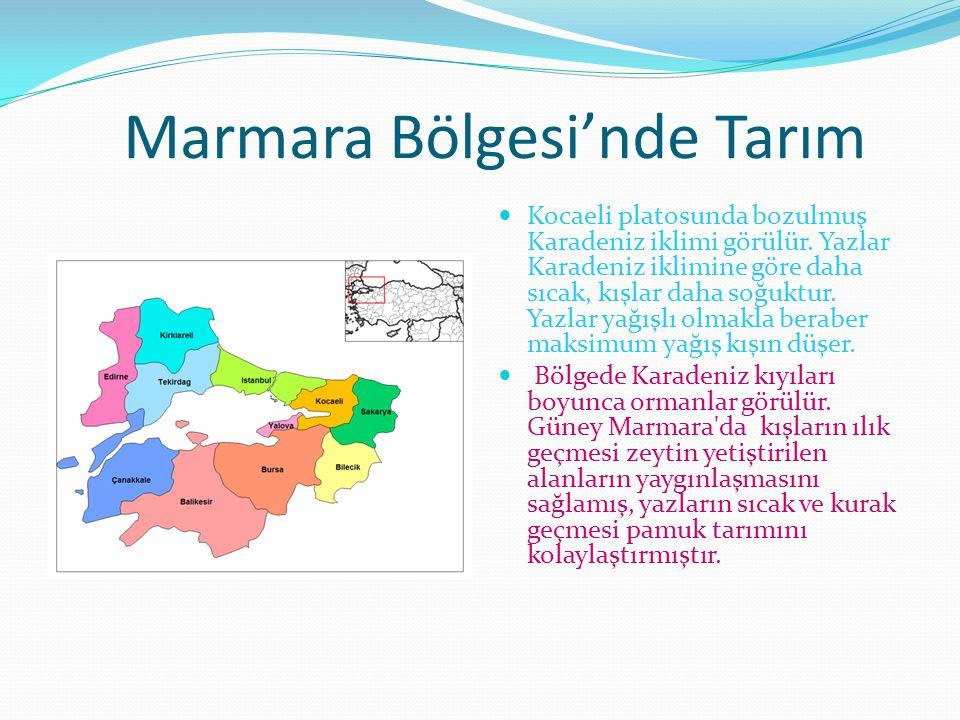 Marmara Bölgesi'nde Tarım