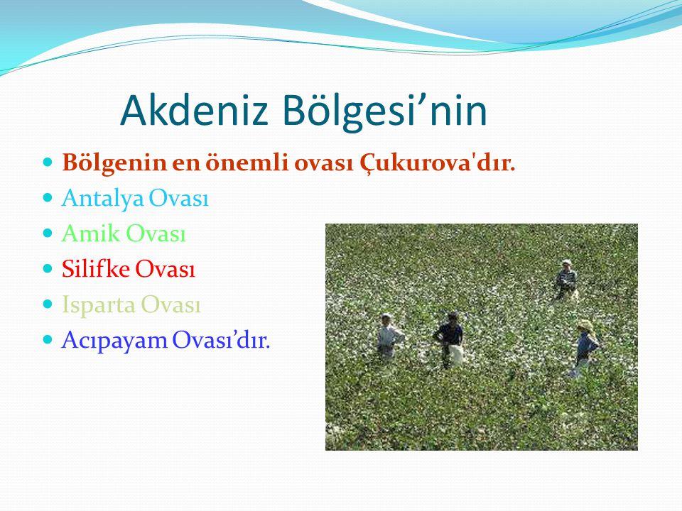 Akdeniz Bölgesi'nin Bölgenin en önemli ovası Çukurova dır.