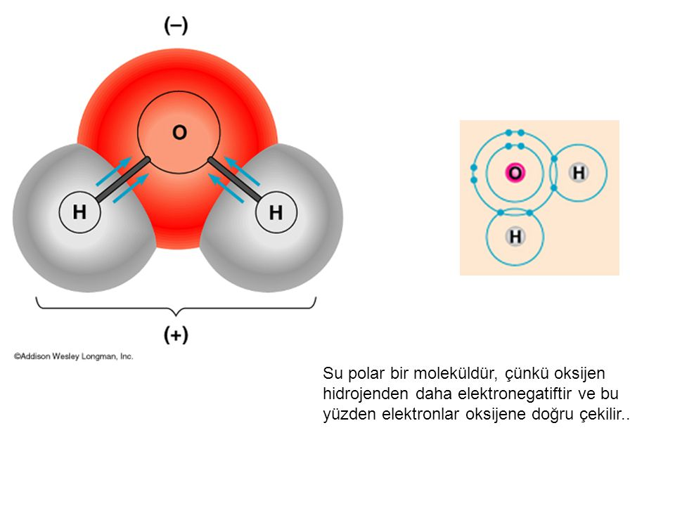 Su polar bir moleküldür, çünkü oksijen hidrojenden daha elektronegatiftir ve bu yüzden elektronlar oksijene doğru çekilir..