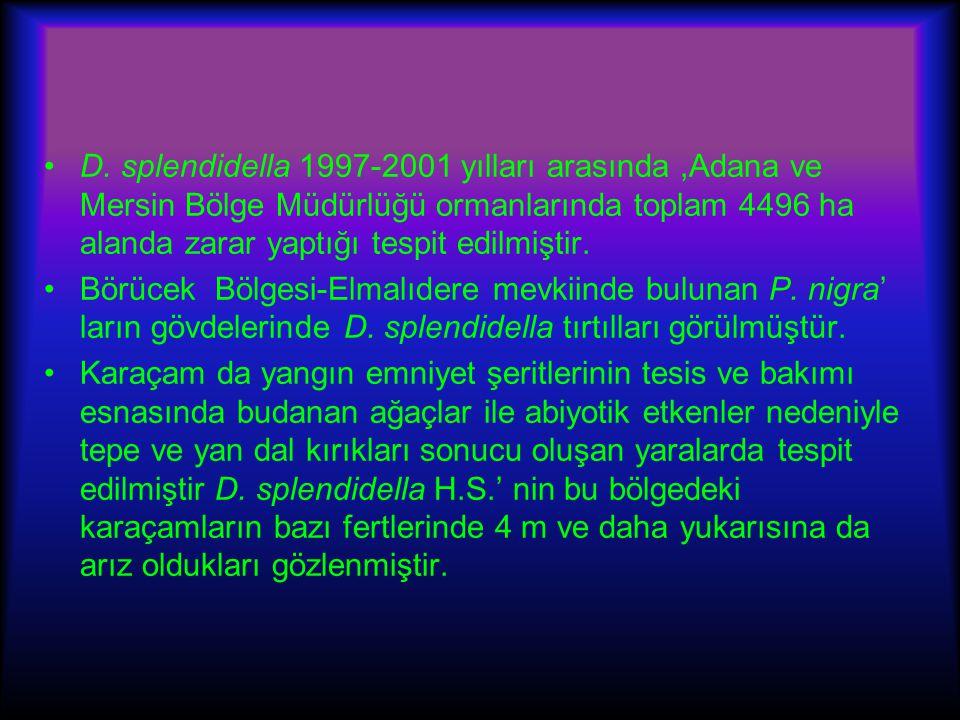 D. splendidella 1997-2001 yılları arasında ,Adana ve Mersin Bölge Müdürlüğü ormanlarında toplam 4496 ha alanda zarar yaptığı tespit edilmiştir.