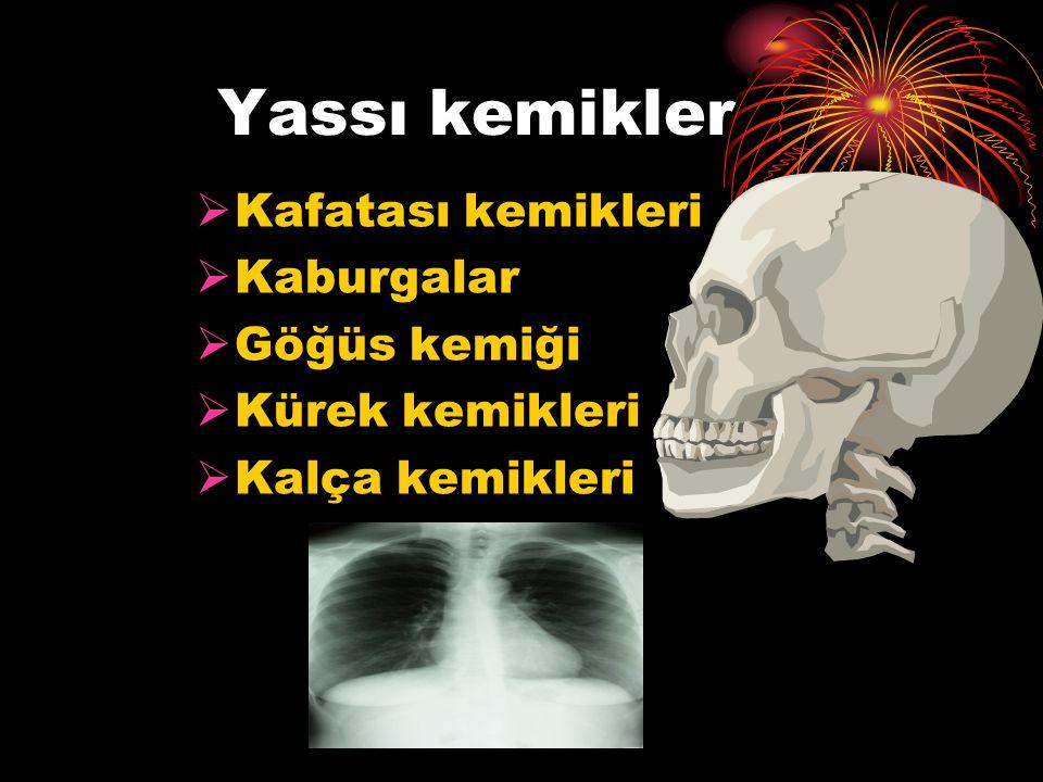 Yassı kemikler Kafatası kemikleri Kaburgalar Göğüs kemiği