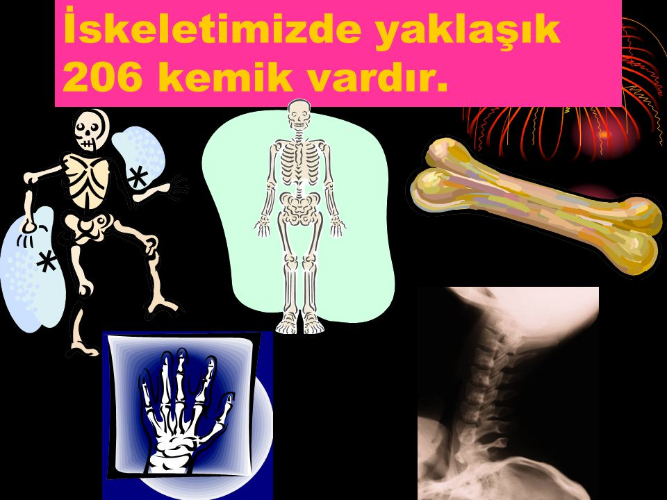 İskeletimizde yaklaşık 206 kemik vardır.