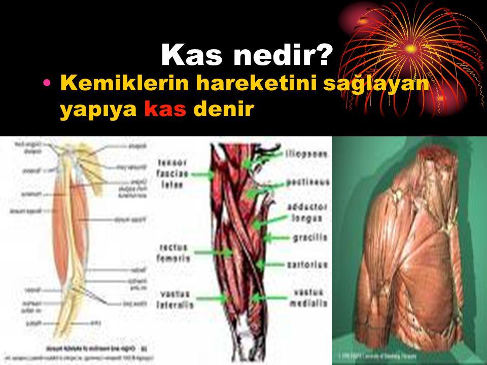 Kas nedir Kemiklerin hareketini sağlayan yapıya kas denir