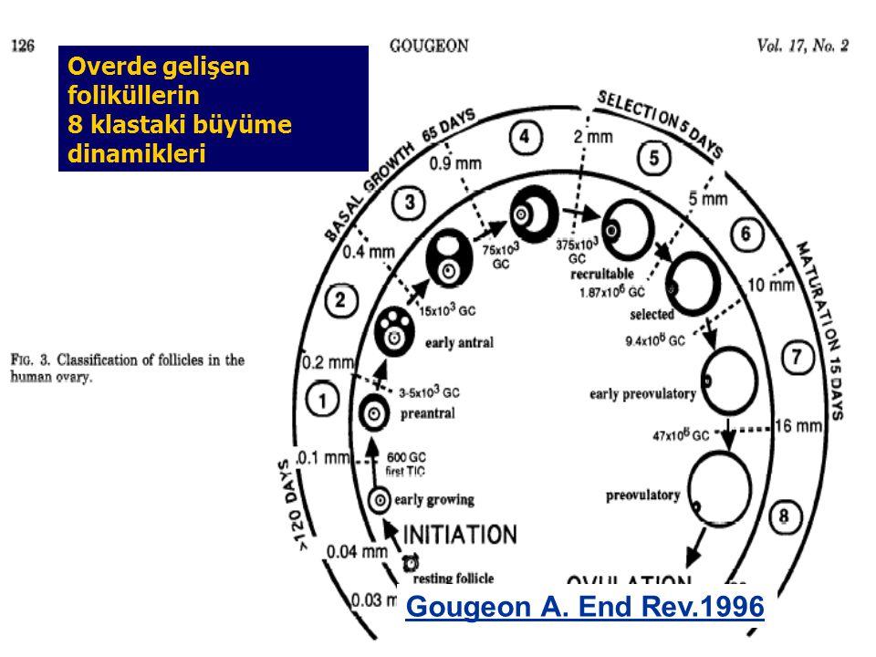 Gougeon A. End Rev.1996 Overde gelişen foliküllerin