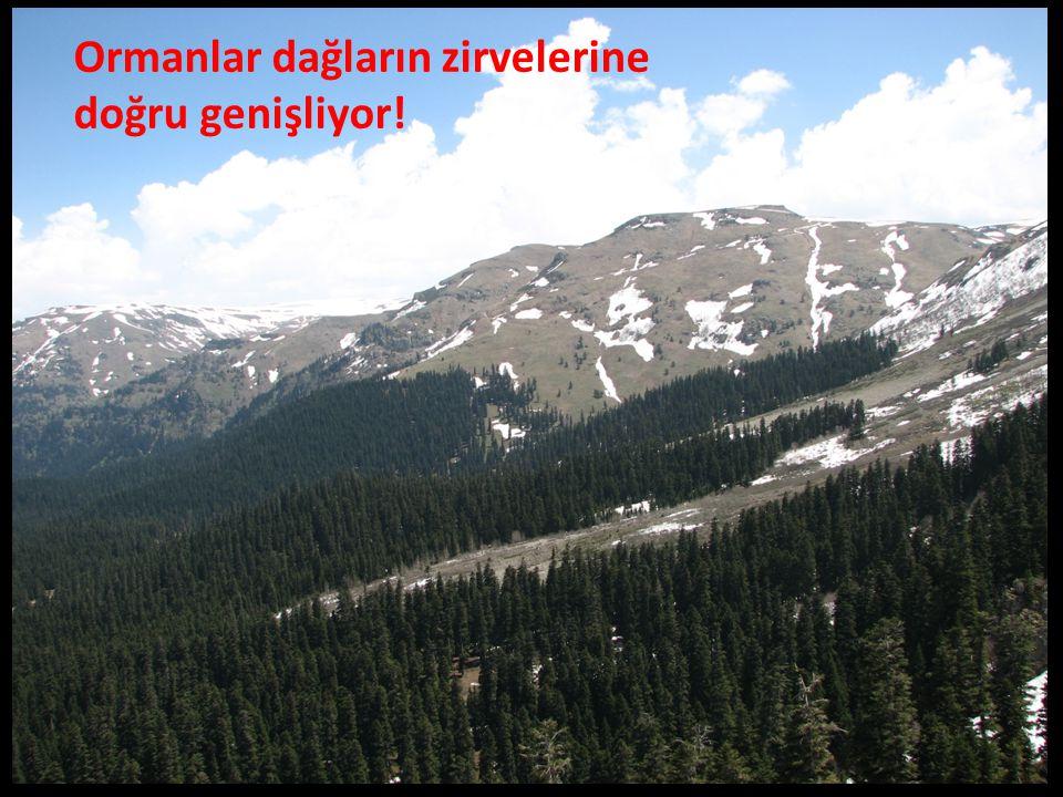 Ormanlar dağların zirvelerine