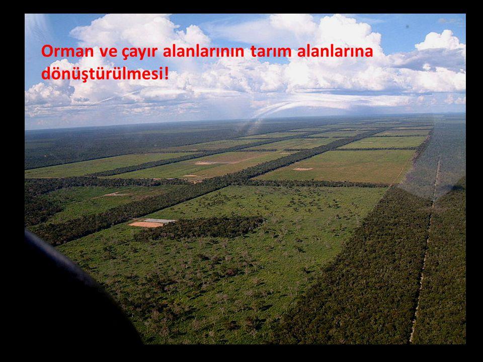 Orman ve çayır alanlarının tarım alanlarına