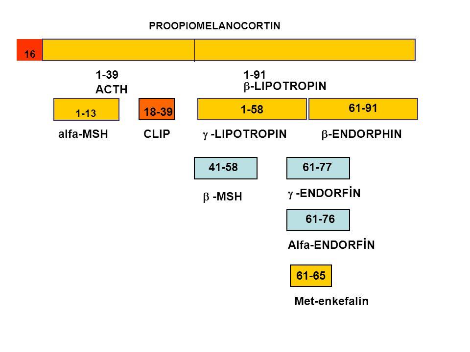 PROOPIOMELANOCORTIN 16 1-13