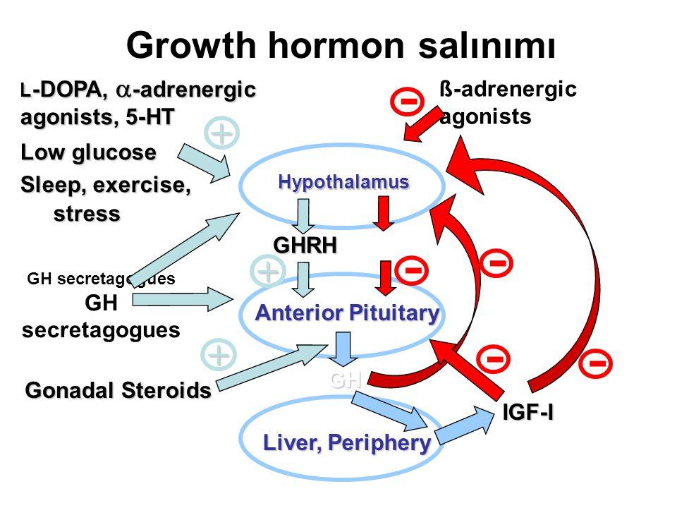 Growth hormon salınımı