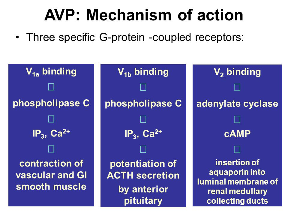 AVP: Mechanism of action