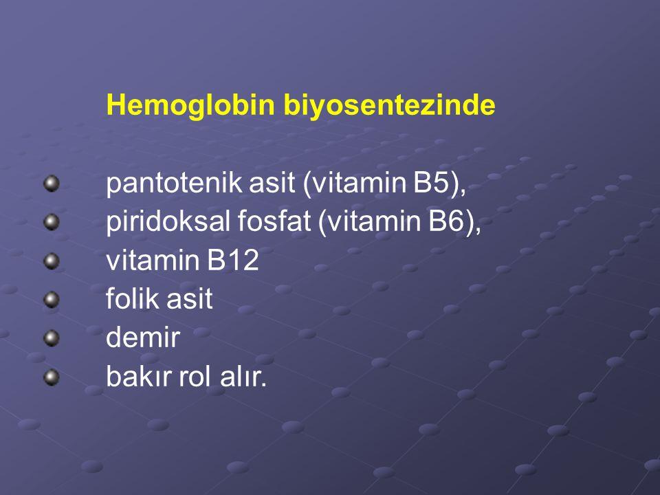 Hemoglobin biyosentezinde