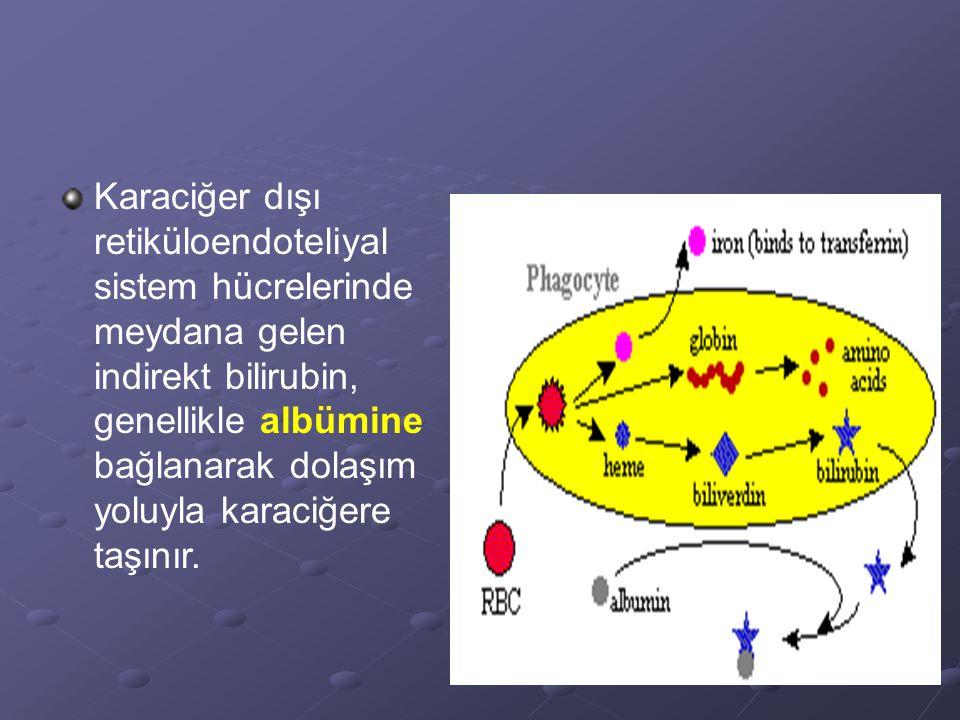 Karaciğer dışı retiküloendoteliyal sistem hücrelerinde meydana gelen indirekt bilirubin, genellikle albümine bağlanarak dolaşım yoluyla karaciğere taşınır.