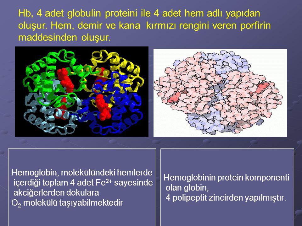 Hb, 4 adet globulin proteini ile 4 adet hem adlı yapıdan oluşur