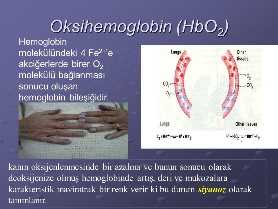 Oksihemoglobin (HbO2) Hemoglobin molekülündeki 4 Fe2+'e akciğerlerde birer O2 molekülü bağlanması sonucu oluşan hemoglobin bileşiğidir.