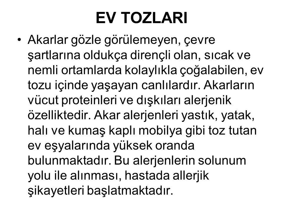 EV TOZLARI