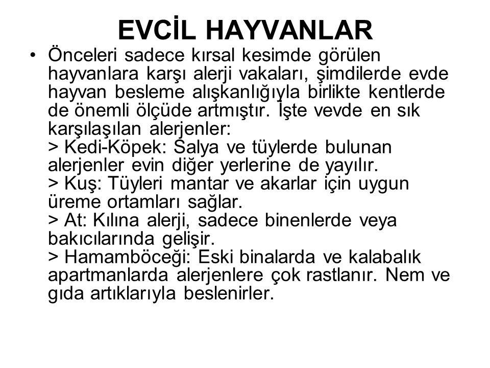 EVCİL HAYVANLAR