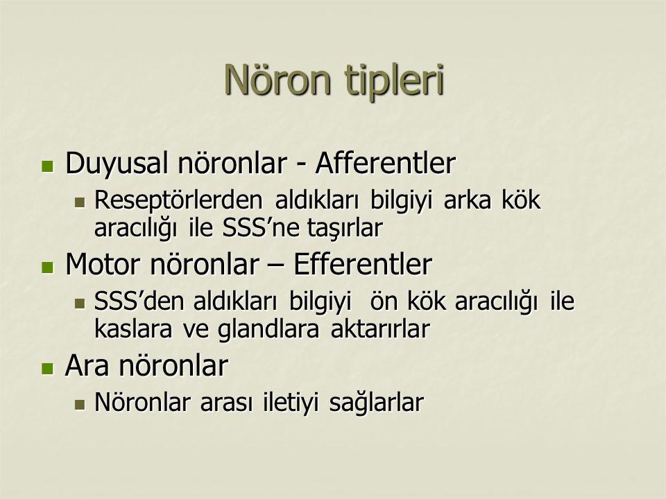 Nöron tipleri Duyusal nöronlar - Afferentler
