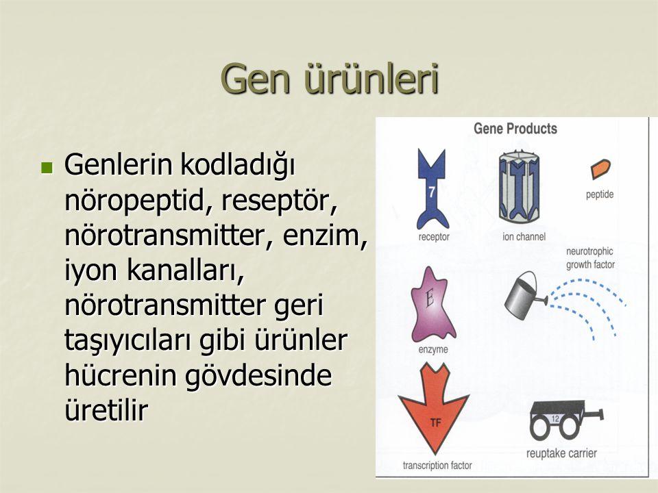 Gen ürünleri