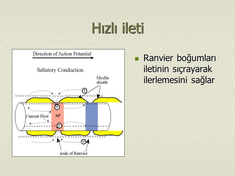 Hızlı ileti Ranvier boğumları iletinin sıçrayarak ilerlemesini sağlar