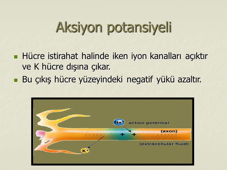 Aksiyon potansiyeli Hücre istirahat halinde iken iyon kanalları açıktır ve K hücre dışına çıkar.