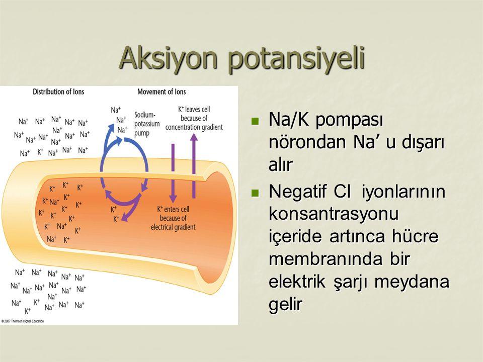 Aksiyon potansiyeli Na/K pompası nörondan Na' u dışarı alır