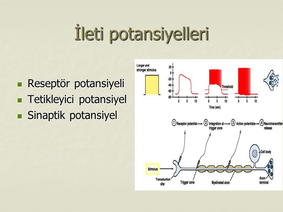 İleti potansiyelleri Reseptör potansiyeli Tetikleyici potansiyel