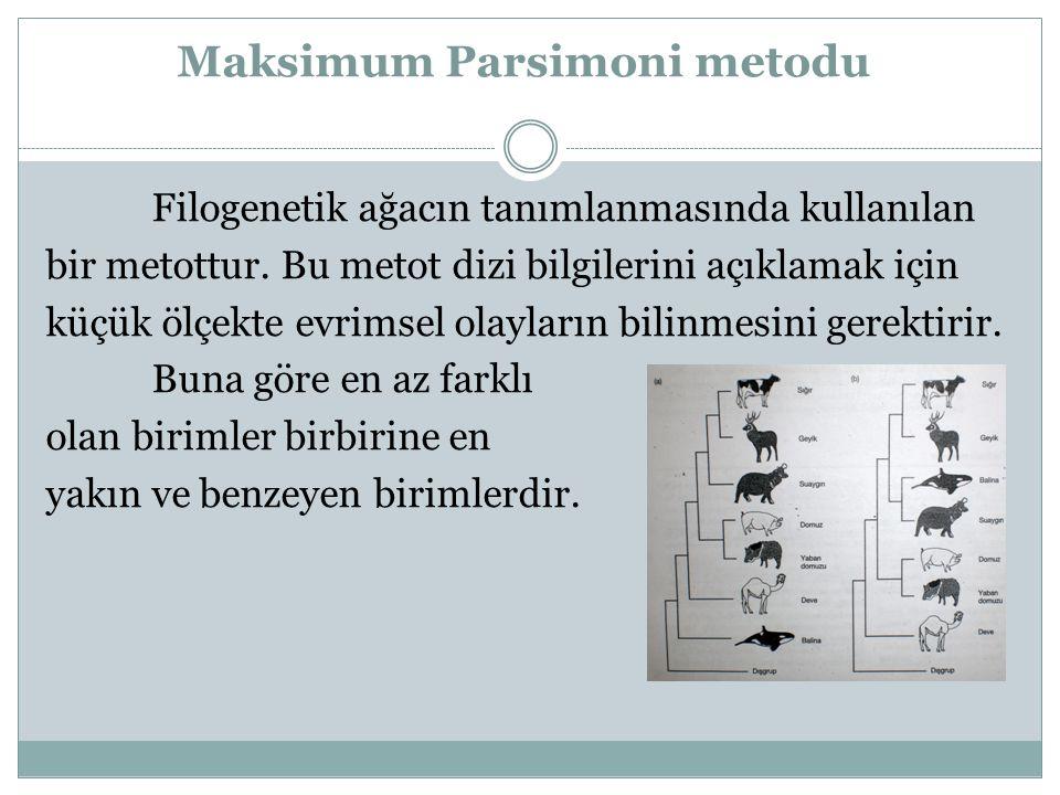 Maksimum Parsimoni metodu