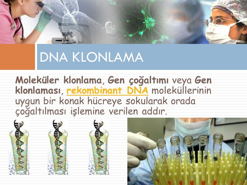 DNA KLONLAMA