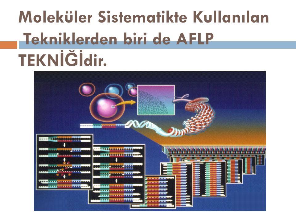 Moleküler Sistematikte Kullanılan Tekniklerden biri de AFLP TEKNİĞİdir.