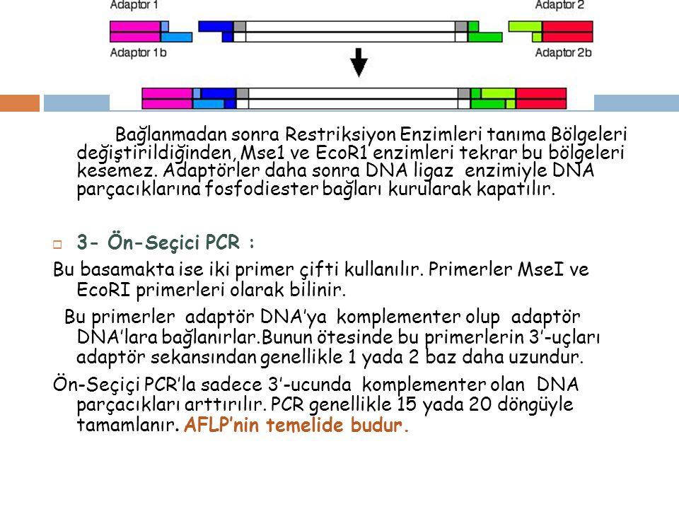 Bağlanmadan sonra Restriksiyon Enzimleri tanıma Bölgeleri değiştirildiğinden, Mse1 ve EcoR1 enzimleri tekrar bu bölgeleri kesemez. Adaptörler daha sonra DNA ligaz enzimiyle DNA parçacıklarına fosfodiester bağları kurularak kapatılır.