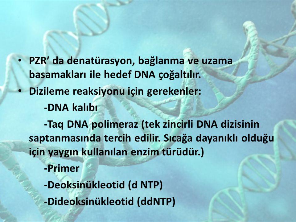 PZR' da denatürasyon, bağlanma ve uzama basamakları ile hedef DNA çoğaltılır.