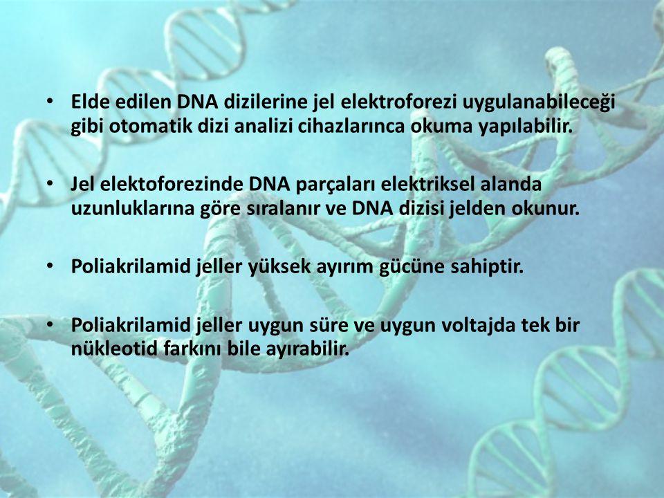 Elde edilen DNA dizilerine jel elektroforezi uygulanabileceği gibi otomatik dizi analizi cihazlarınca okuma yapılabilir.