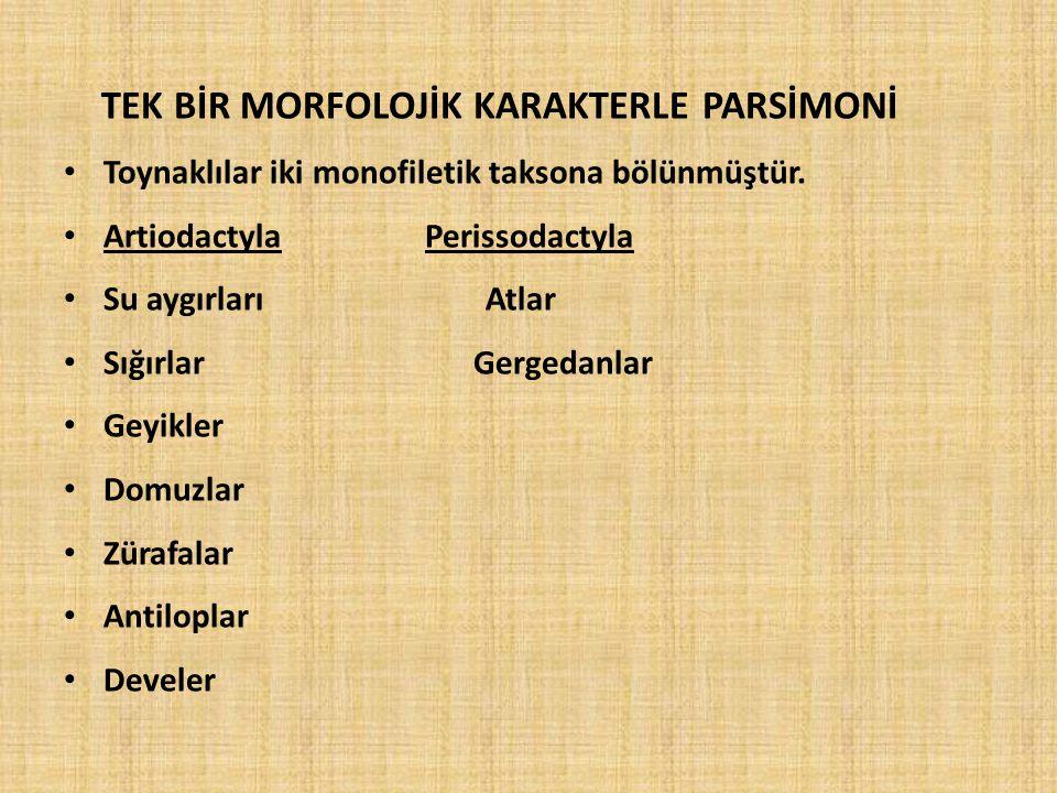 TEK BİR MORFOLOJİK KARAKTERLE PARSİMONİ