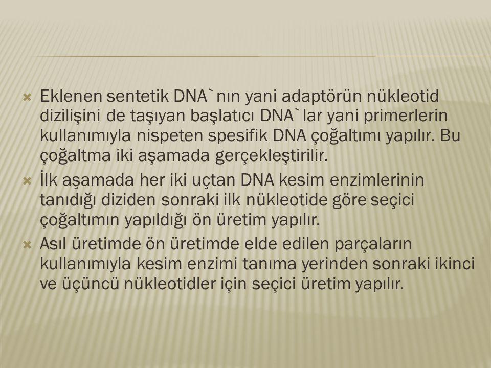 Eklenen sentetik DNA`nın yani adaptörün nükleotid dizilişini de taşıyan başlatıcı DNA`lar yani primerlerin kullanımıyla nispeten spesifik DNA çoğaltımı yapılır. Bu çoğaltma iki aşamada gerçekleştirilir.