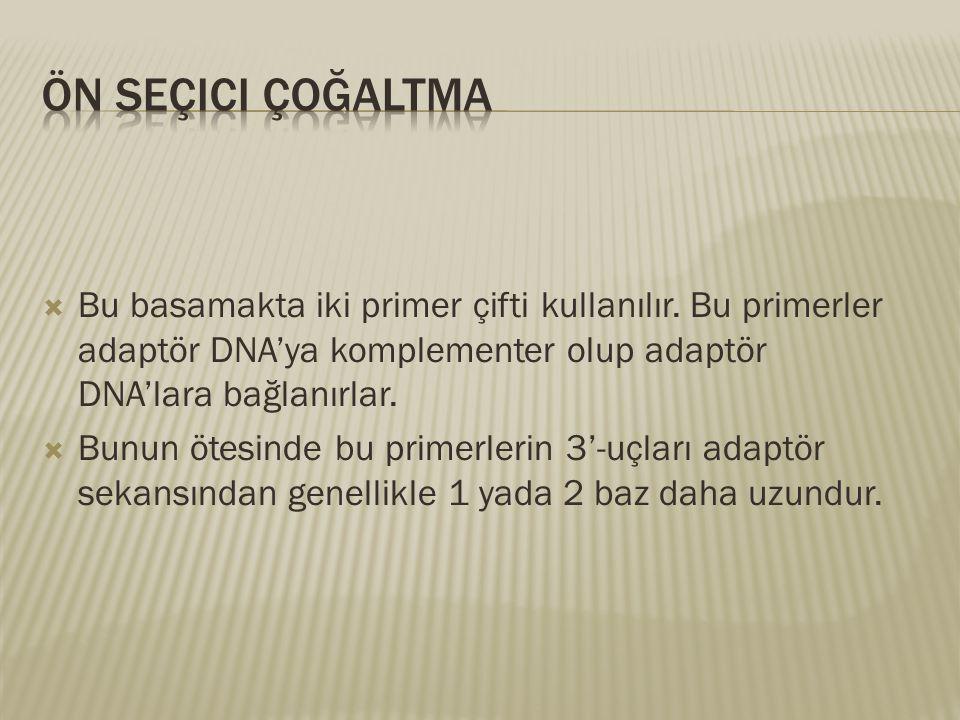 Ön Seçici Çoğaltma Bu basamakta iki primer çifti kullanılır. Bu primerler adaptör DNA'ya komplementer olup adaptör DNA'lara bağlanırlar.
