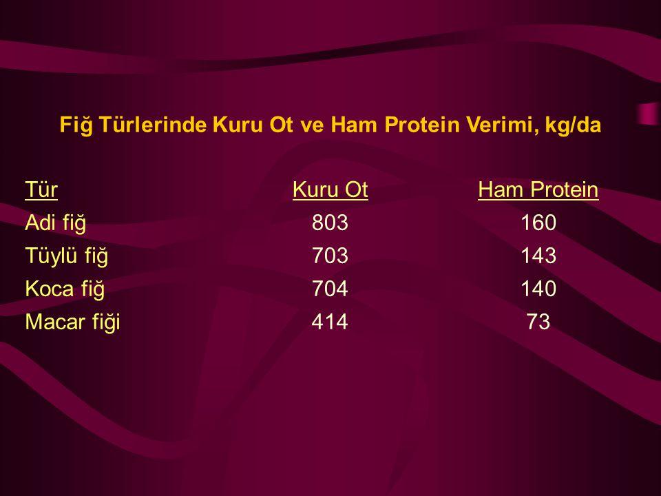 Fiğ Türlerinde Kuru Ot ve Ham Protein Verimi, kg/da
