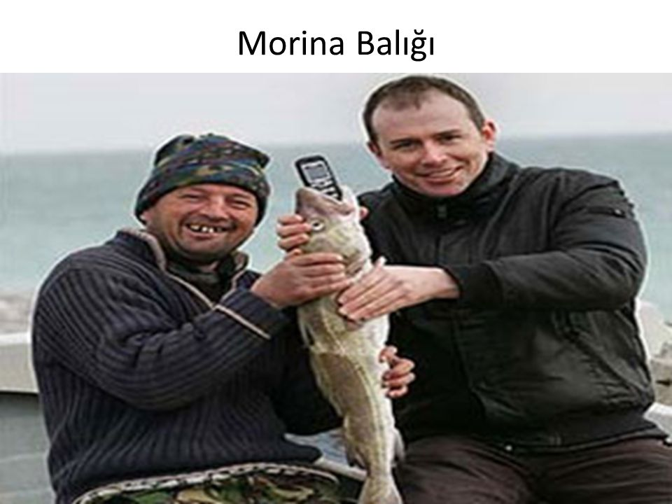 Morina Balığı