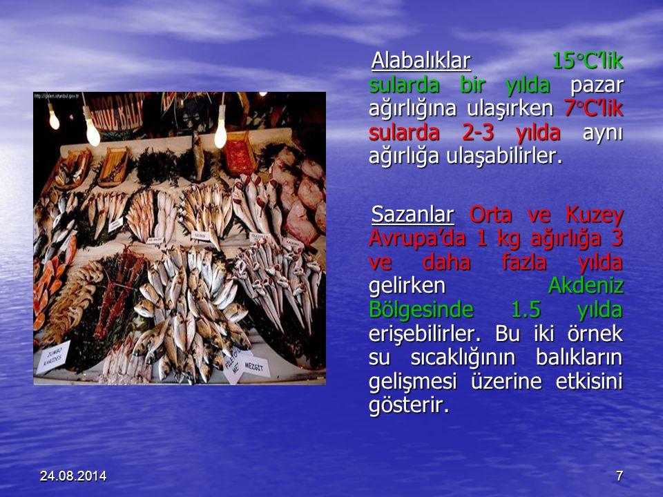 Alabalıklar 15C'lik sularda bir yılda pazar ağırlığına ulaşırken 7C'lik sularda 2-3 yılda aynı ağırlığa ulaşabilirler.