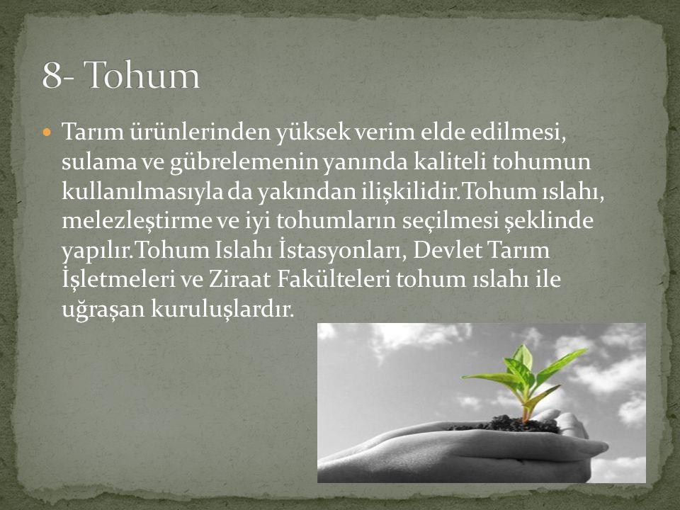 8- Tohum
