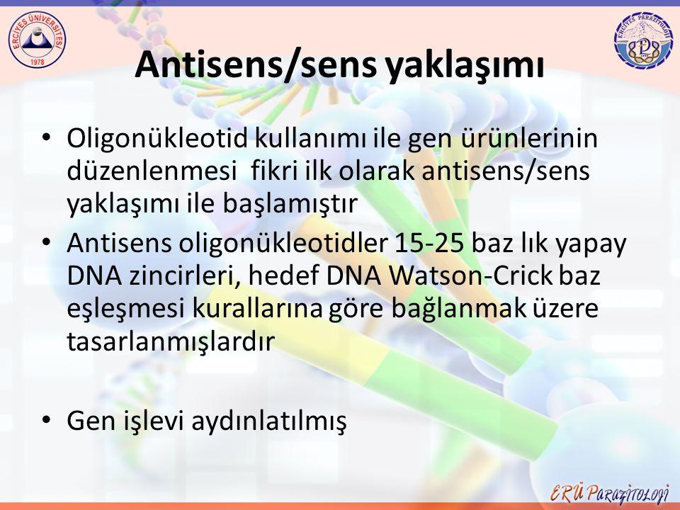 Antisens/sens yaklaşımı