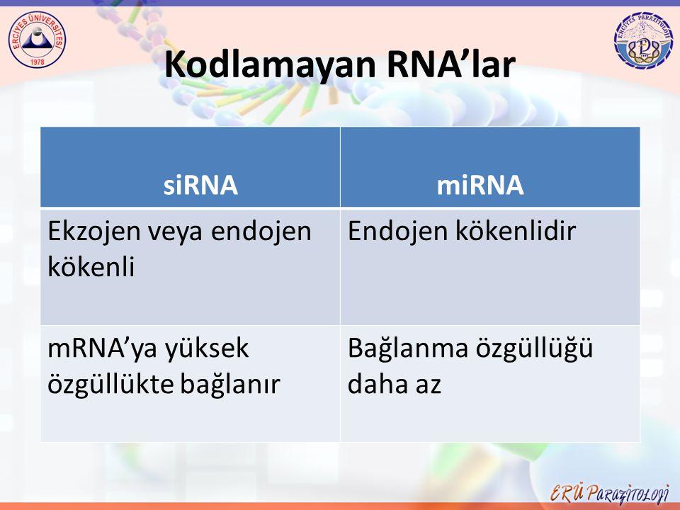 Kodlamayan RNA'lar siRNA miRNA Ekzojen veya endojen kökenli