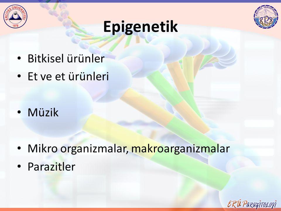 Epigenetik Bitkisel ürünler Et ve et ürünleri Müzik