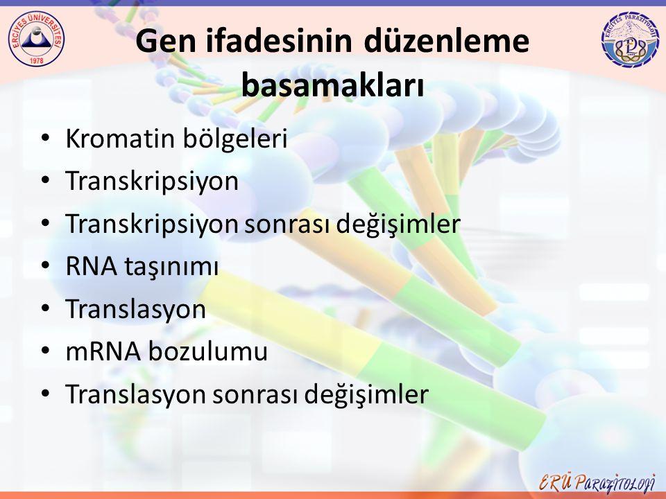 Gen ifadesinin düzenleme basamakları
