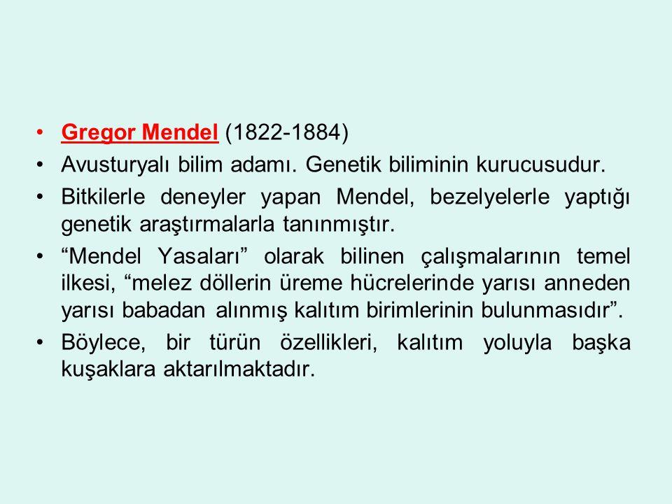 Gregor Mendel (1822-1884) Avusturyalı bilim adamı. Genetik biliminin kurucusudur.