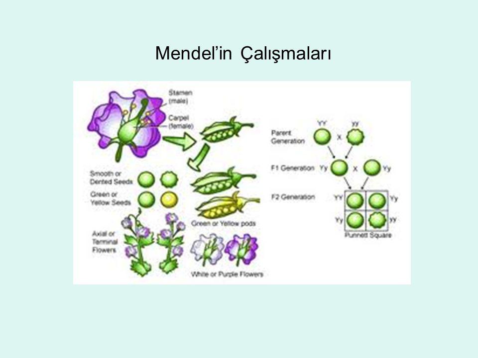 Mendel'in Çalışmaları