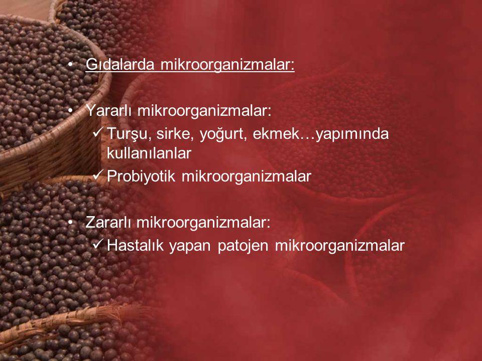 Gıdalarda mikroorganizmalar: