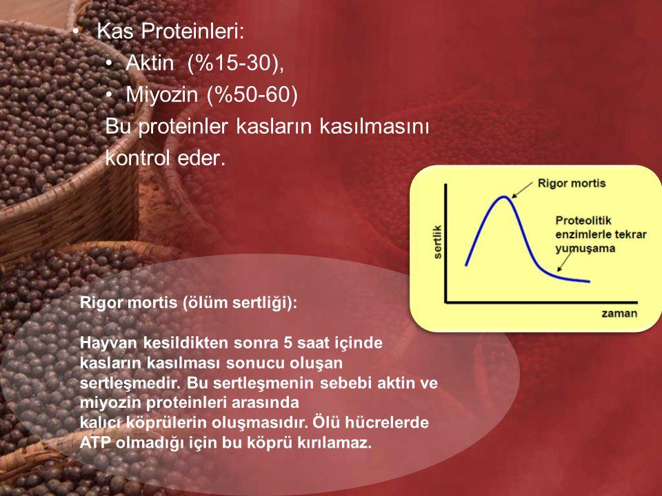 Bu proteinler kasların kasılmasını kontrol eder.