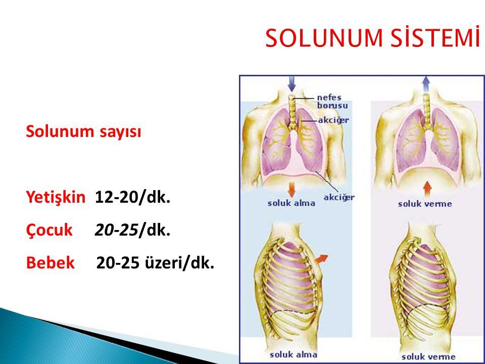 SOLUNUM SİSTEMİ Solunum sayısı Yetişkin 12-20/dk. Çocuk 20-25/dk.